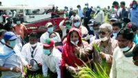 সরকার সরাসরি কৃষকের নিকট থেকে ধান কিনছে : কৃষিমন্ত্রী