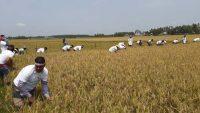 হবিগঞ্জে ধানকাটায় শিক্ষক নিয়োগ প্যানেল বাস্তবায়ন কমিটি