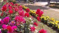 মাধবপুর মডেল সরকারি প্রাথমিক বিদ্যালয়ে ফুলবাগান উদ্বোধন